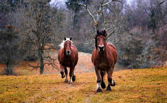 Que faut-il savoir sur un complément alimentaire cheval ?