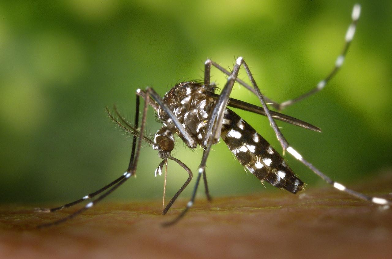 Quelles sont les raisons de la piqûre des moustiques