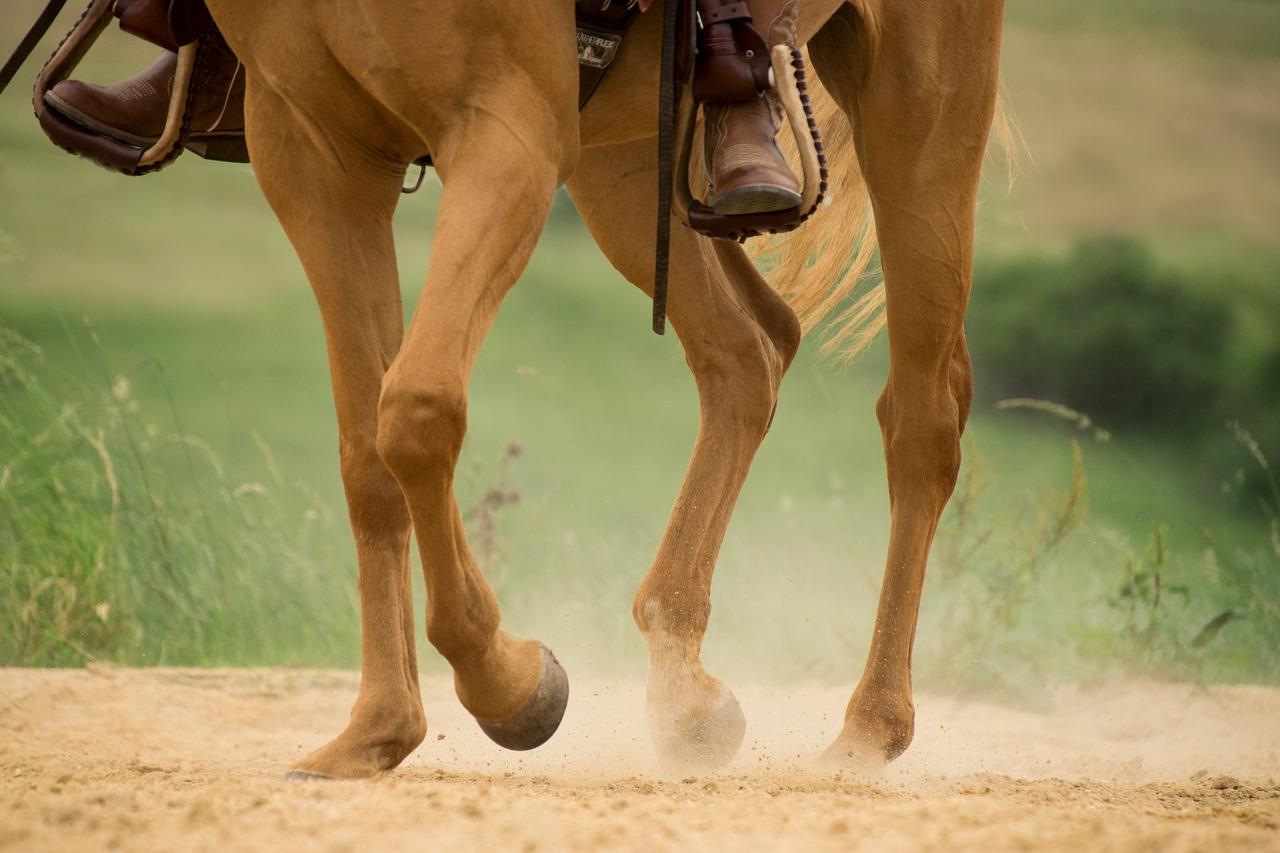 L'étrier : un outil pilier pour l'équitation
