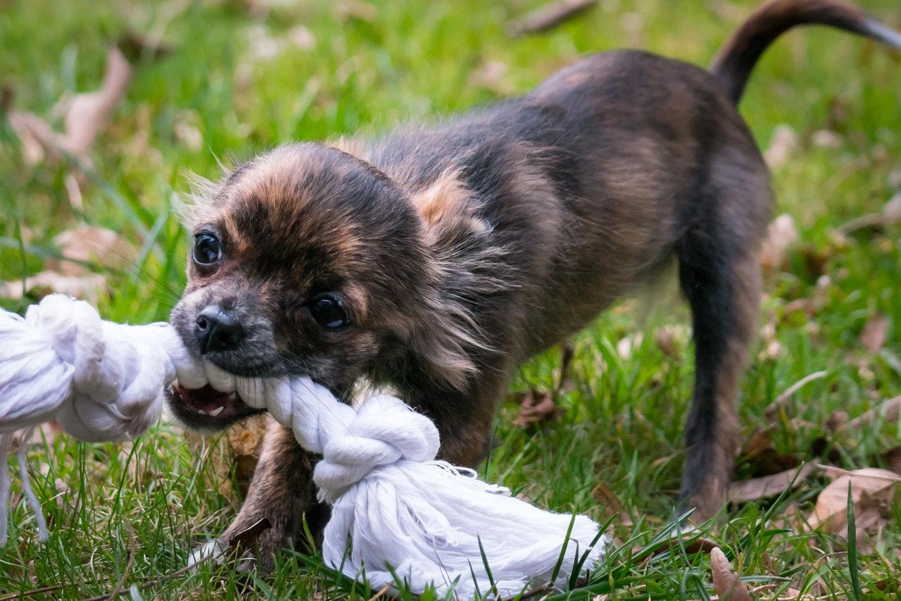 Les produits pour vétérinaire : parlons-en !