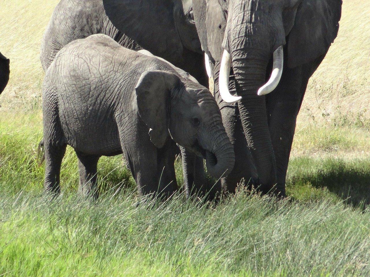 4 choses à savoir sur les bébés éléphants