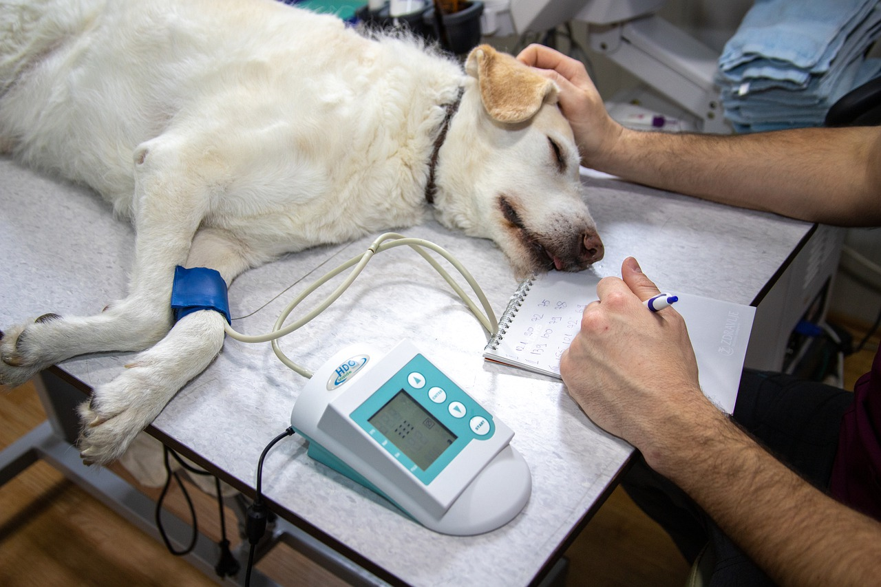 mission d'un vétérinaire de garde