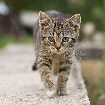 Pourquoi envisager de laisser sortir son chat ?