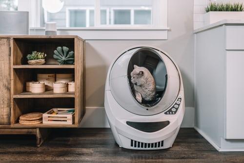 Litière autonettoyante pour chat: comment faire le meilleur choix?